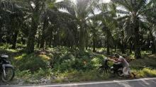 Indonesia imposes moratorium on new palm oil plantations
