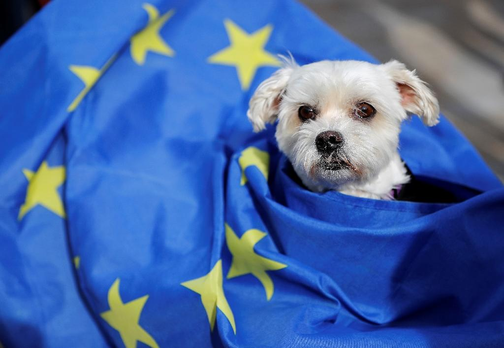 As a result of the change, dog owners are likely to face increased bureaucracy and need more preparation time in order to take their canine companions to the continent (AFP Photo/Tolga AKMEN)