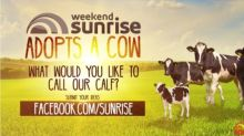 Weekend Sunrise adopts a cow!
