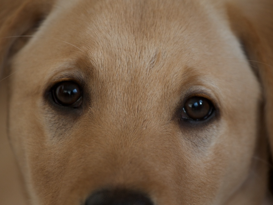 Science Just Proved a Harsh Truth About Very Good Dogs