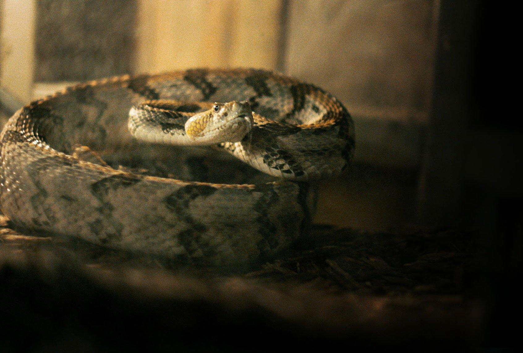 Appalachian Pentecostal Snake Handlers Increasingly Look to Doctors for Help With Snake Bites After Several High-Profile Deaths