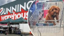 Woman's photo of puppy in a Bunnings trolley sparks debate online