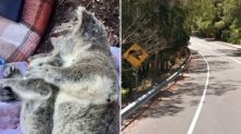 'It will haunt me': Sad story behind photo of dead koala 'cradling' her joey