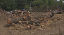 Developer made to pay for cutting down 40 mature trees