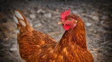 El extraño caso de la mujer que creyó ser una gallina