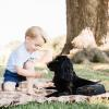 Prince George Shared Ice Cream With His Dog and Now the Duke and Duchess Are Being Accused of 'Animal Cruelty'