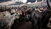 Hunger for beef offers rewards and risks for Nigeria's pastoralists