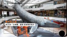【周末好去處】與20米「巨無霸」藍鯨 探索奧妙海洋