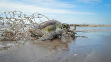 Balance ecológico 2018: más del 90% de la fauna marina asistida tuvo afecciones causadas por el hombre