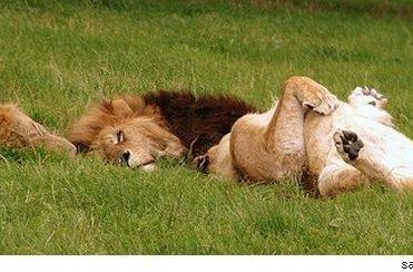 Sunday Morning Funnies: Rub my belly