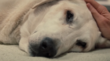 Vets reveal heartbreaking reality of putting pets down
