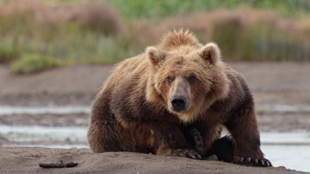 Into the World of 'Bears'