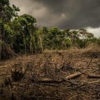 Amazon rainforest for sale on Facebook as deforestation soars
