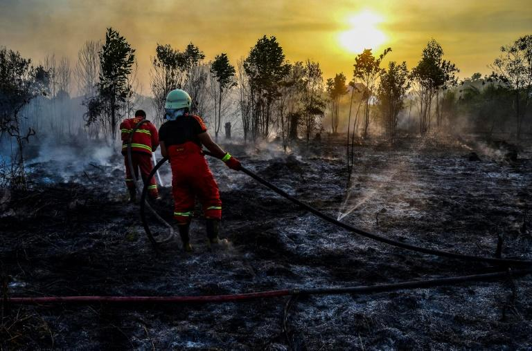 Forests worldwide have been logged and burned on an industrial-scale over the decades (AFP Photo/WAHYUDI)