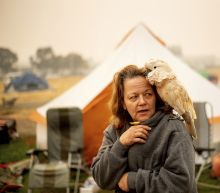 Animal survivors of the California fires