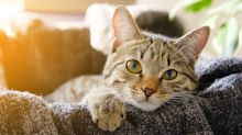 Relax and unwind by watching cats in this Tokyo cat cafe's 24-hour live-stream
