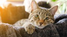 #QuarantineCats auf Twitter: Lustige Katzen-Tweets aus der Isolation