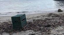 Cane spiaggiato ad Ischia: trovato morto in una cassetta ortofrutticola