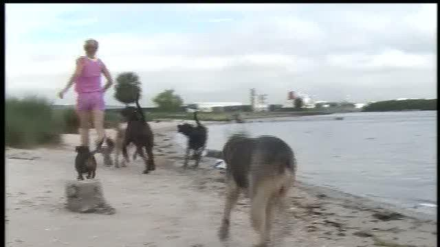 Amateur Athlete: Pet owner trains with dogs