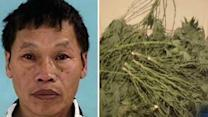 Marijuana smell from home leads to drug bust