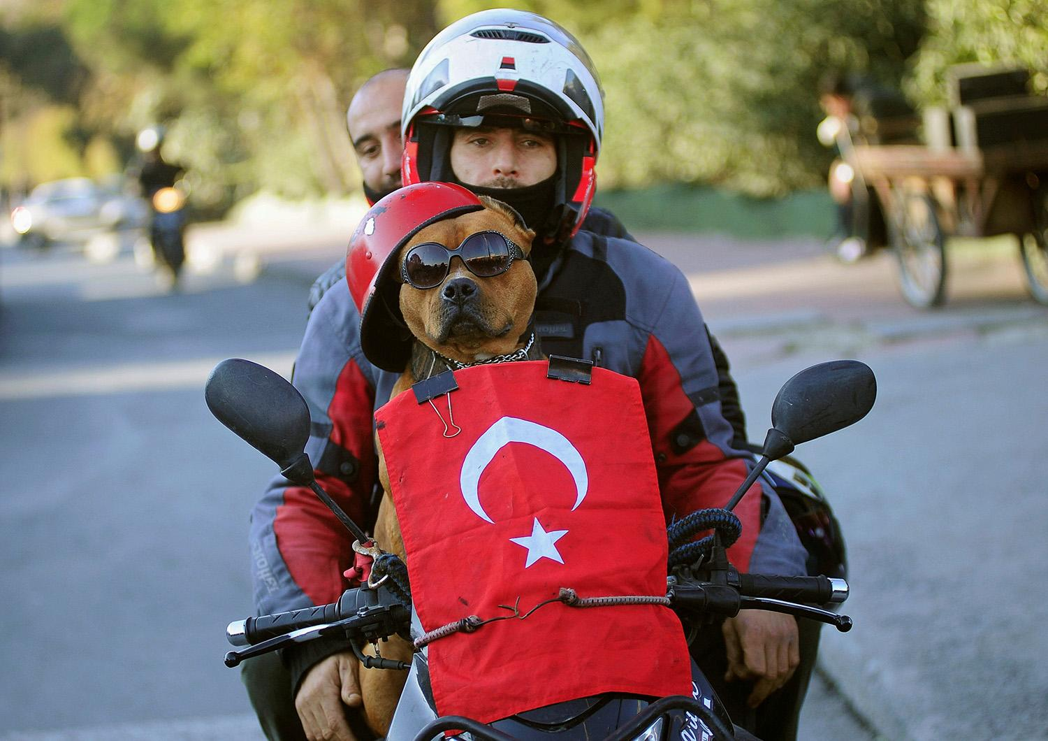 <p>A motorcyclist and his dog drive past the scene of Saturday's blasts in Istanbul, Turkey, Dec. 11, 2016. (Photo: Yagiz Karahan/Reuters) </p>