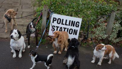 Hunde vor Wahllokalen: Die wahren Gewinner der Wahl in Großbritannien