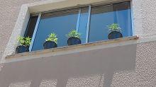 Jovem coloca pés de maconha na janela para tomar sol e é presa