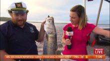Fisherman catches huge barramundi LIVE on air