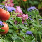Gardening Experts Say You Should Always Plant Flowers in Your Vegetable Patch