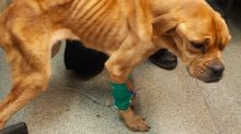 Police search for owner of emaciated dog left for dead at side of road