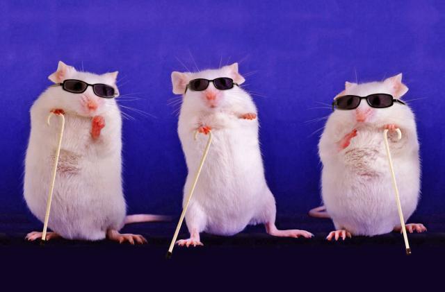 Scientists partially restore blind mice's eyesight