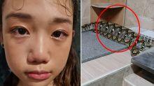 'Heartbreaking': Girl horrified to find pet cat eaten by giant snake