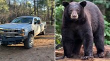 'Tragic': Woman killed by bear while walking pet dogs