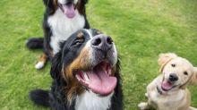 Twitter-Hype: Nutzer erzählen über ihre dümmsten Hunde