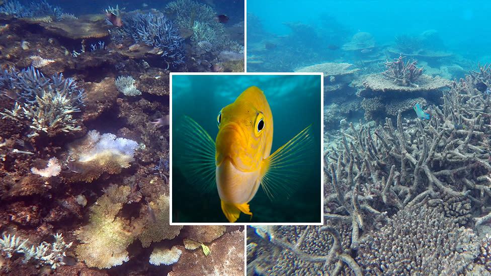 Scientists Use Loudspeakers To Restore Coral Reef
