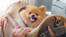 Proposed airline ban on emotional support animals sparks debate