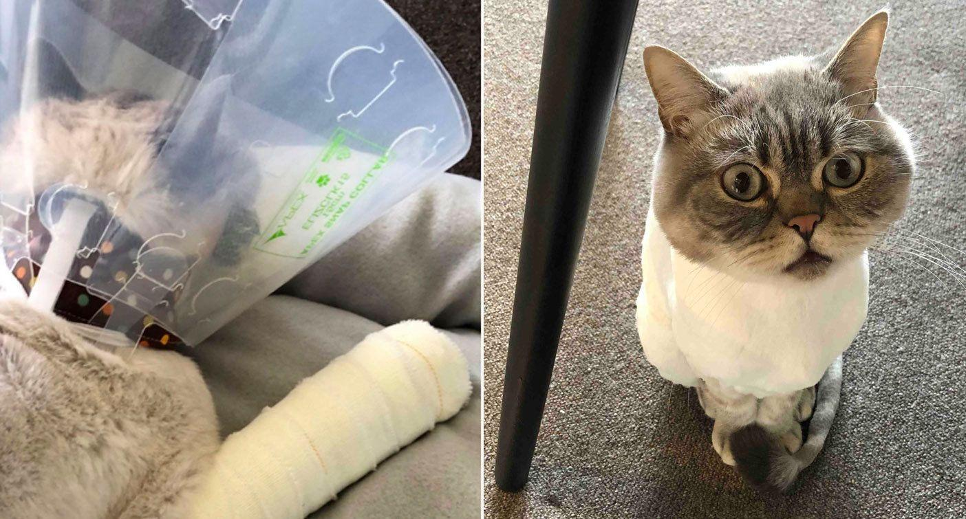 Cat's miraculous survival after falling from 18th floor balcony