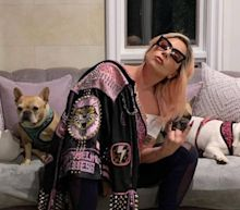 Lady Gaga poised to hand over $500,000 reward to mystery woman after safe return of Bulldogs