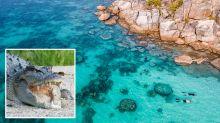 Snorkeller attacked by crocodile at Queensland tourist destination