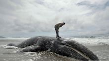 So Many Dead Whales Are Washing Up On The West Coast That NOAA Is Pleading For Help