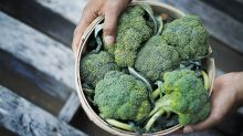 Another reason to eat your broccoli: It promotes a healthy gut