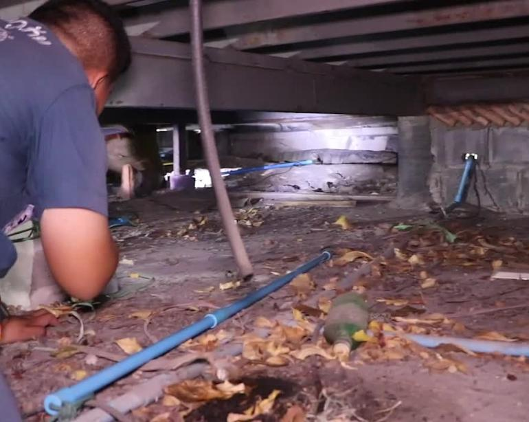 Epic chase to catch two monitor lizards hiding under coffee shop in Thailand