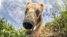 Bear-y cute! Russian photographer captures wild animals as they search for salmon dinner