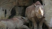 A comment section of a photo of a rhinoceros breastfeeding hilariously calls out human mom shamers