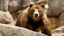 Danger: 2 Stocks to Hold in a Bear Market