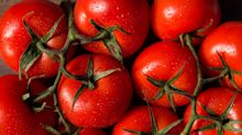 Gehören Tomaten in den Kühlschrank oder nicht?