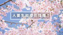 習慣學習:人要生如櫻花燦爛!