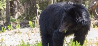 Bear closures expand near Canmore