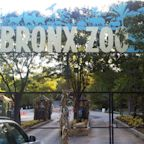 Bronx Zoo tiger becomes first of its kind to test positive for coronavirus, officials say