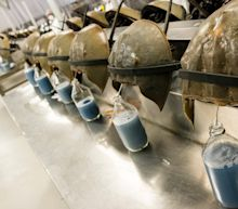 Covid-19 vaccine will rely on blood taken from horseshoe crabs